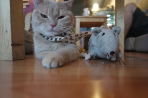 catmosphere_cat_cafe_Chiang_Mai_Thailand_cats_yuvitapohan