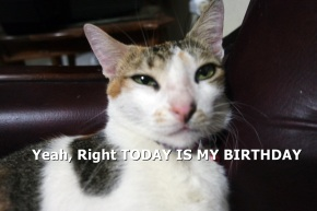 happy_birthday_comel_today_is+my_birthday_cat_pic